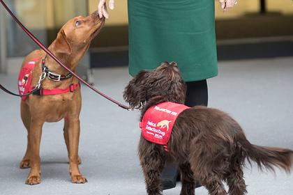 Собаки будут вынюхивать больных с коронавирусной инфекцией