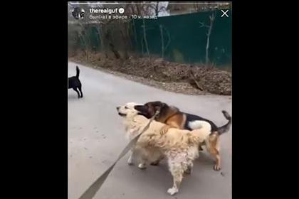 Гуф позволил своей собаке покусать соседского пса и посмеялся над этим