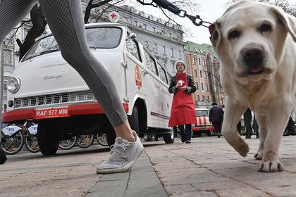 В Москве начали сдавать питомцев в аренду для прогулок во время карантина