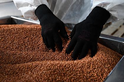 Белоруссия запретила вывозить картошку из-за коронавируса