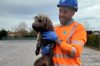 Домашний пес погнался за крысой и потерялся в канализационной трубе