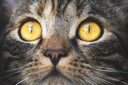 Кошки из очага распространения коронавируса массово заразились