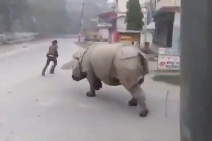 Носорог погнался за нарушителем карантина и попал на видео