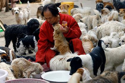 ВКитайской республике  запретили есть собак
