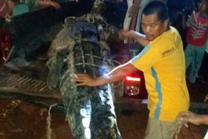 Крокодила расстреляли из автомата и нашли в его брюхе съеденного ребенка