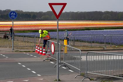 В Нидерландах уничтожили миллионы тюльпанов из-за коронавируса