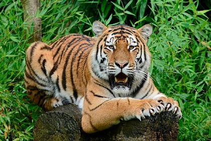 Зоопарк скормит одних животных другим из-за коронавируса