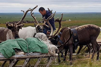 Оленеводов в Якутии и учителей в Арктике решили поддержать