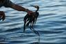 """Катастрофа Deepwater Horizon имела тяжелые последствия для экологии и бизнеса в США. С одной стороны, нефтяной разлив <a href=""""https://edition.cnn.com/2019/09/10/us/crabs-deepwater-horizon-study-scn-trnd/index.html"""" target=""""_blank"""">уничтожил</a> тысячи морских млекопитающих и черепах вдоль американского побережья (некоторые принадлежат к исчезающим видам) и загрязнил их среду обитания. Утечка нефти привела к сокращению популяций животных и появлению у них генетических мутаций. <br></br> С другой стороны, загрязнение вод Мексиканского залива и береговой линии <a href=""""https://www.independent.co.uk/environment/deepwater-horizon-oil-spill-gulf-mexico-conservation-a9473401.html"""" target=""""_blank"""">ударило</a> по американскому бизнесу. Катастрофа на месяцы остановила традиционный для региона рыбный промысел. Когда же ситуация в заливе немного улучшилась, и рыбаки вернулись в море, они столкнулись с невозможностью продать улов. «Многие люди не хотели покупать креветки, выловленные в Мексиканском заливе, опасаясь съесть зараженные морепродукты», — объяснили в американской правозащитной организации Boat People SOS."""