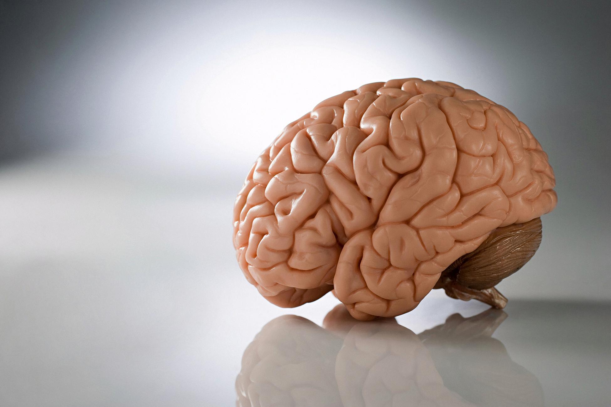 Подарить мозг картинки