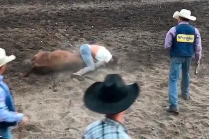 Бывший чемпион UFC сразился с быком и завалил его голыми руками