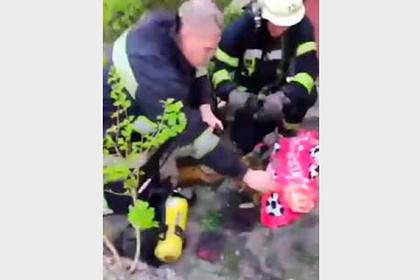 Украинские пожарные спасли двух котов и попали на видео
