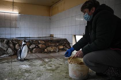 Российские врачи за свой счет накормили голодающих в зоопарке животных