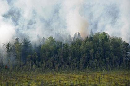Арендаторов леса обяжут тушить пожары