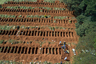 """Выросло число погребений и на самом большом в Латинской Америке кладбище в районе Вила-Формоза в Сан-Паулу. Там уже в начале апреля зафиксировали 30-процентный прирост числа похорон. <br></br> В целом подобная проблема наблюдается по всей стране, и дело не только в распространении самого коронавируса. Очень много бразильцев в принципе живет вдали от больниц в изолированных сельских районах, а COVID-19 сейчас активно проникает именно в небольшие населенные пункты. <br></br> Серьезную проблему представляют и трущобы, которые называют фавелами. В них проживает, по разным оценкам, 11-13 миллионов человек из 211 миллионов. У жителей фавел проблемы с доступом к чистой воде, а в комнате обычно находится не менее трех человек. В таких условиях соблюдать рекомендации по гигиене и социальной дистанции просто невозможно. При этом людям, которые остались без работы из-за ограничений, приходится надеяться лишь на помощь негосударственных организаций. <br></br> Проблемы касаются и коренного населения страны — индейцев. Первый случай заболевания в одном из бразильских племен <a href=""""https://lenta.ru/news/2020/04/10/amazon/"""" target=""""_blank"""">выявили</a> в апреле. Тогда отмечалось, что индейцы могут вообще вымереть из-за коронавируса, поскольку уязвимы к завезенным в общины извне болезням. К середине мая число затронутых болезнью племен <a href=""""https://santiagotimes.cl/2020/05/16/brazil-leader-of-amazonian-peoples-dies-of-coronavirus/"""" target=""""_blank"""">достигло</a> 38. В одном из них от COVID-19 умер вождь. <br></br> При этом власти по меньшей мере игнорируют вторжения работников нелегальных шахт и лесорубок на индейские территории, что лишь способствует распространению вируса. 3 мая группа ученых и знаменитостей даже написала открытое письмо, в котором назвала происходящее геноцидом коренного населения."""