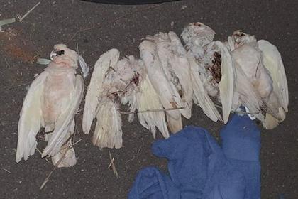 Сотни мертвых птиц упали с неба и встревожили местных жителей