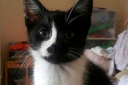 Пропавший кот нашелся в сотнях километров от дома и удивил хозяйку