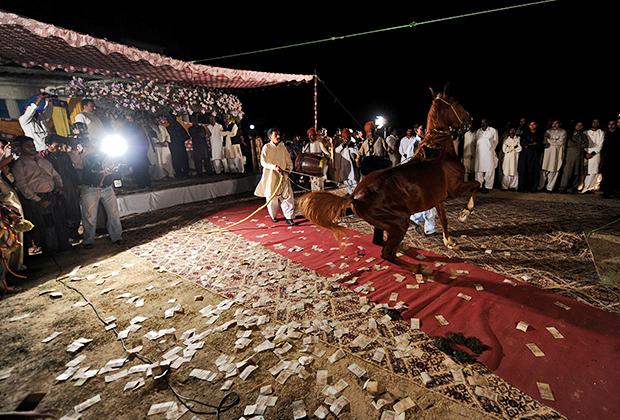 Конное представление во время свадебного торжества в деревне Санджан. Исламабад, Пакистан