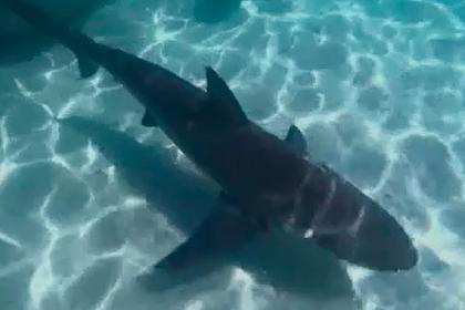 Стая голодных акул поохотилась возле рыболова и попала на видео