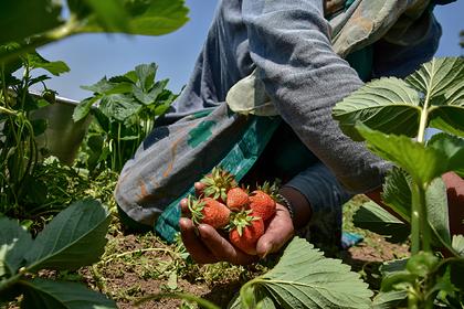 В Эстонии призвали отказаться от рабского труда украинцев