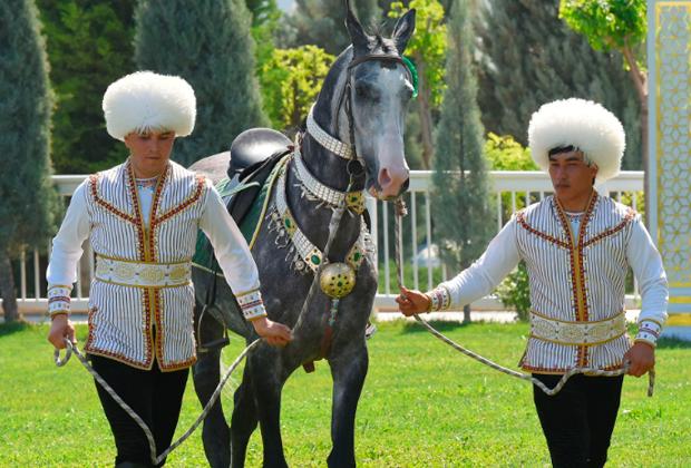 Конкурс красоты ахалтекинских скакунов