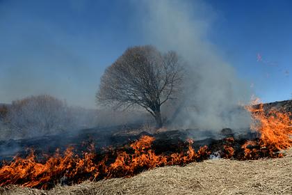 Россиян захотели строже наказывать за пожары по неосторожности