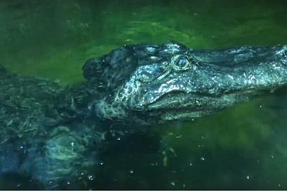 В московском зоопарке умер «аллигатор Гитлера»