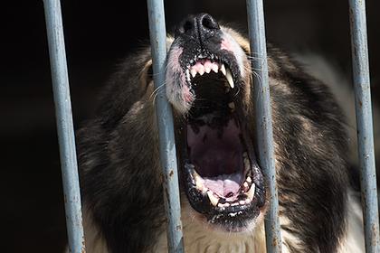 Собака загрызла пожилую хозяйку в российском городе