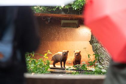 Владельцы зоопарка пригрозили убить животных в случае нехватки денег на корм