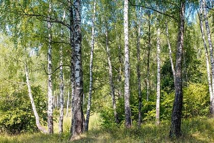 Россиянин с тремя детьми сбежал от коронавируса в лес