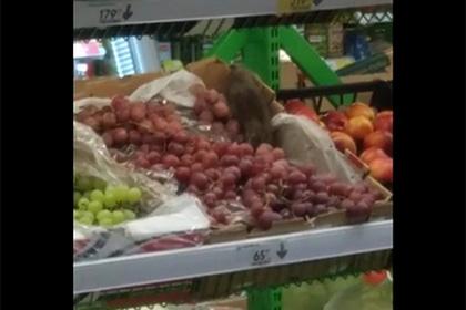 Сидящие на фруктах в российском супермаркете крысы попали на видео