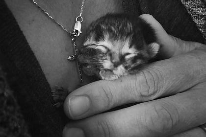 Умер прославившийся в интернете четырехглазый котенок с двумя мордочками
