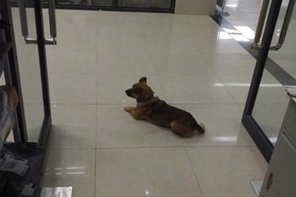 Преданная собака месяцами ждала в больнице умершего от коронавируса хозяина