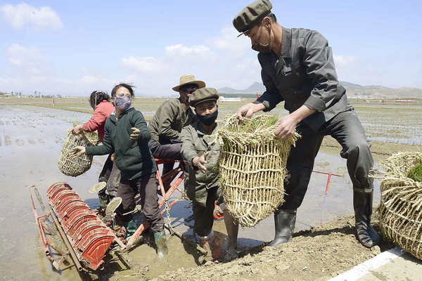 Farmers plant rice in paddy fields in Nampo, North Korea, on May 12, 2020. (Photo by Kyodo News via Getty Images)