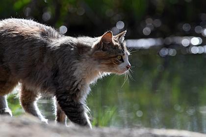 Кошка попала в карантин в России после обнаружения у нее коронавируса