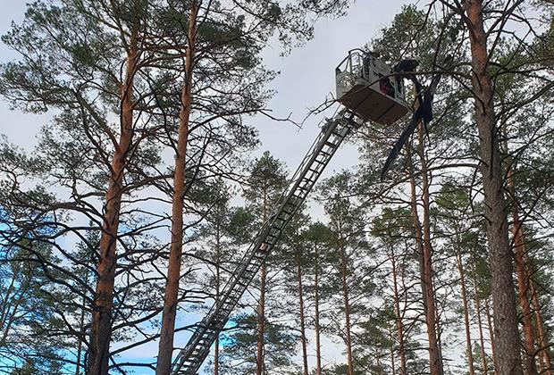 Потерянный дрон снимают с дерева