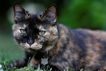 Россия изучит возможность заражения коронавирусом от кошек