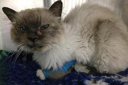 Хозяйка воссоединилась с потерявшейся десять лет назад кошкой