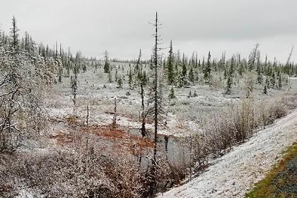 На Ямале выпал первый летний снег