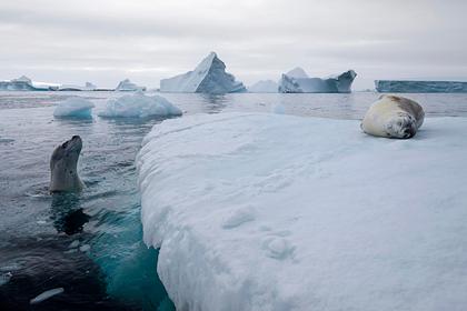 Зафиксирован массовый побег животных от климатической катастрофы
