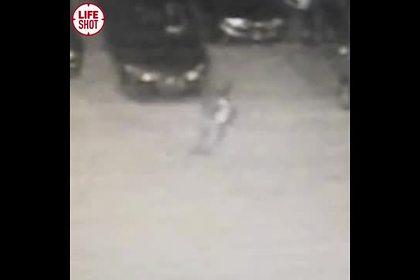 Момент поджога 13 автомобилей в российском городе попал на видео
