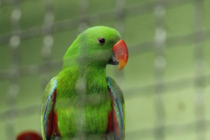 Бдительный попугай помог хозяйке задержать грабителя