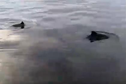 Россиянин отправился порыбачить и заснял на видео танец двух дельфинов