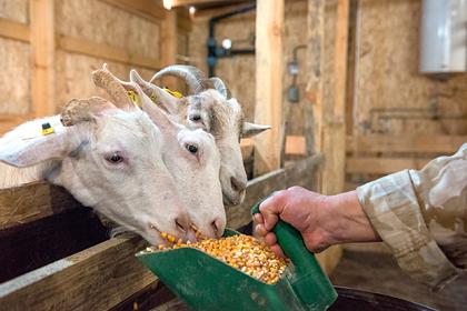 Фермеры еще одного российского региона получат гранты