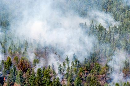 Лесные пожары в Сибири повлияли на моря Арктики