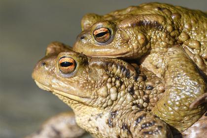 Раскрыты записи Исаака Ньютона о лечении рвотой жаб