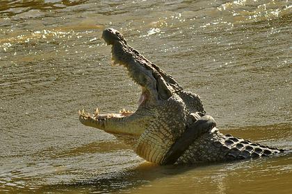 Крокодил утащил мужчину на глазах у его отца