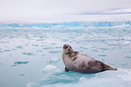 Великую Сибирскую полынью предложили сделать заповедной