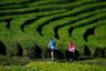 Размеренные и одухотворенные чайные поля есть и на территории нашего государства, где долгое время чай считался напитком исключительно знатных особ. Теперь в Краснодарском крае содержат сразу несколько плантаций, которые отличаются высокой экологичностью — в процессе выращивания чая российские фермеры не используют химические средства. К примеру, у них нет необходимости в борьбе с вредителями — они попросту не заводятся, так как зимой кусты накрывает слой снега, — более того, это как нельзя лучше сказывается на вкусе чая.