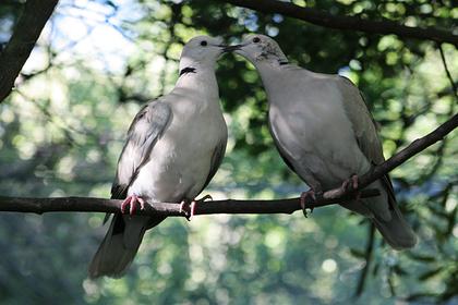 У Музея Победы в Москве выпустили в небо 200 голубей